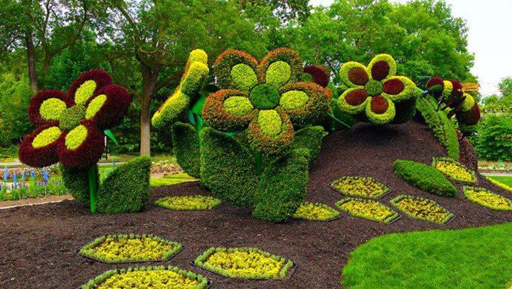 Guanaroca del sur asombrosas esculturas de plantas fotos - Imagenes de jardineria ...