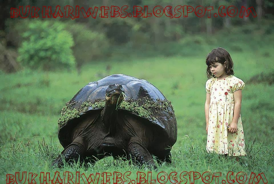 gal225pagos giant tortoise biggest type of tortoise