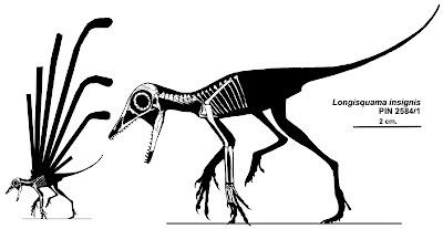 Longisquama_insignis_skeleton&silhouette