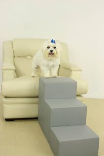 cãozinho