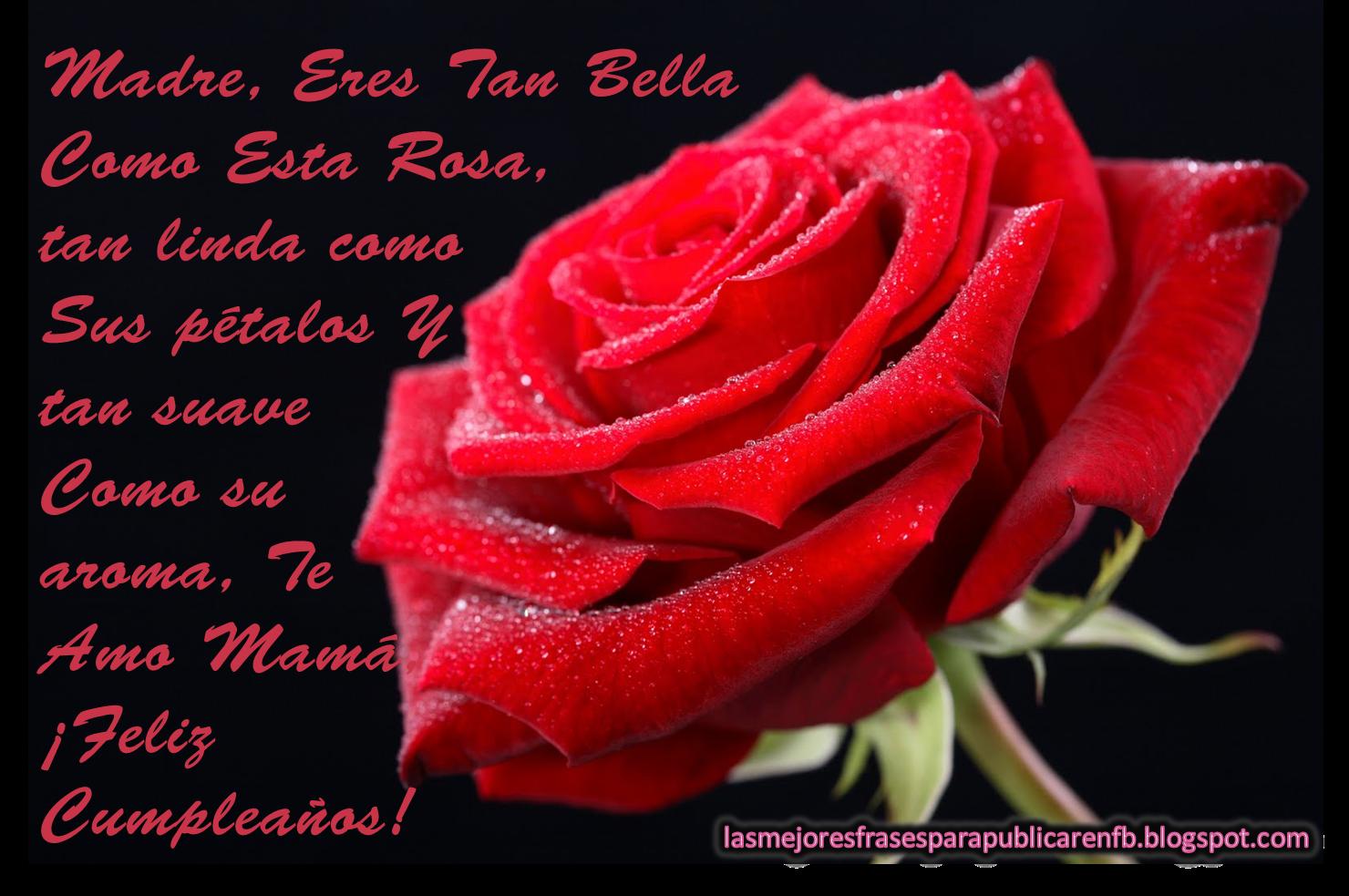 Frases Para Cumpleaños De Mamá: Madre Eres Tan Bella Como Esta Rosa