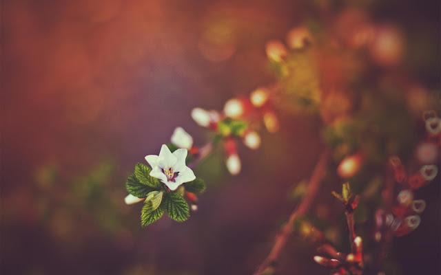 Hình nền khu vườn mùa xuân - ảnh 5