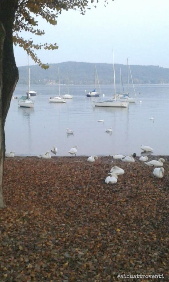 aiquattroventi-autunno-lago-cigni