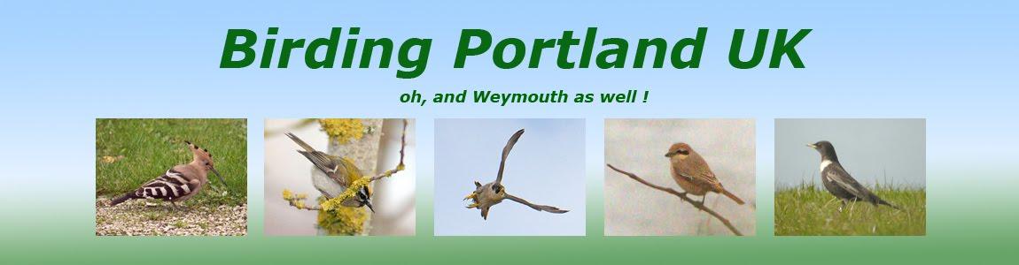 Birding Portland UK