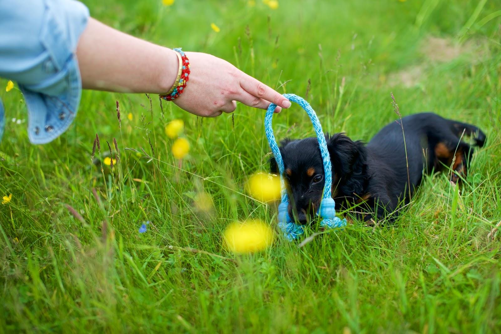 liquidgrain liquid grain dog puppy hetty teething toy treats feedem
