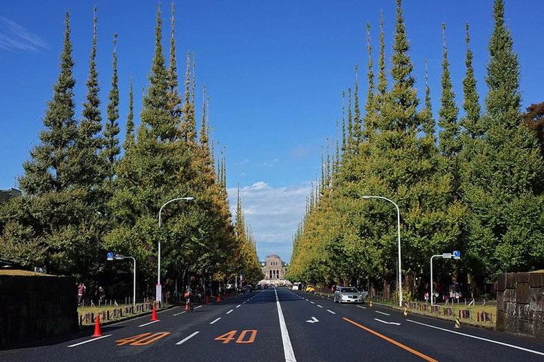 La Avenida de los Ginkgos de Tokio | Japón