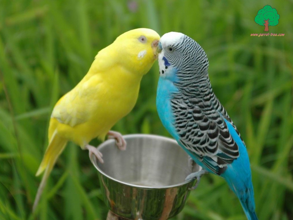 Fast Facts about Parrots Bird - Free HD Wallpaper