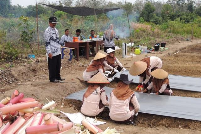 Ujian Kompetensi Kejuruan jurusan Agribisnis Tanaman Pangan dan Hortikultura SMK Negeri 2 Tambusai Utara