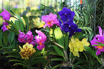 beautiful orchid colors