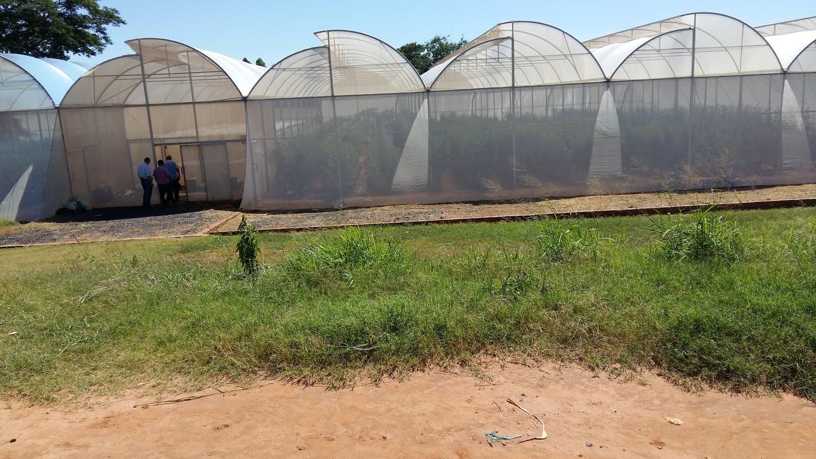 Projeto PAI Agricultura Avançada