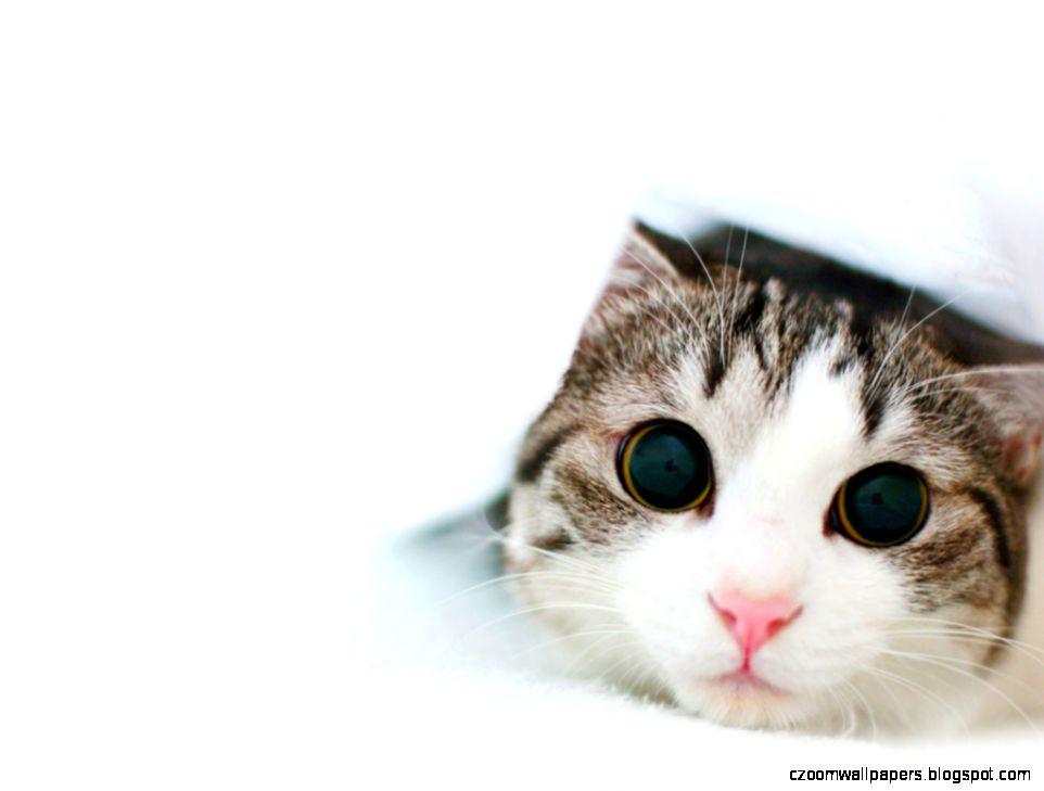 Cute Cat Wallpaper Computer 2196 Wallpaper