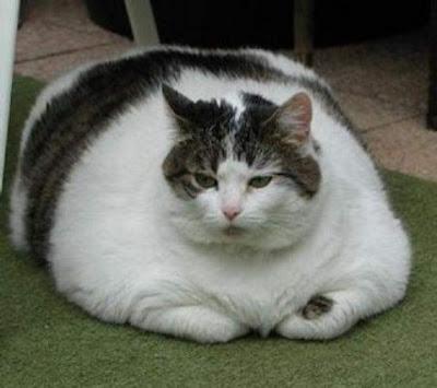 Fat+Cat