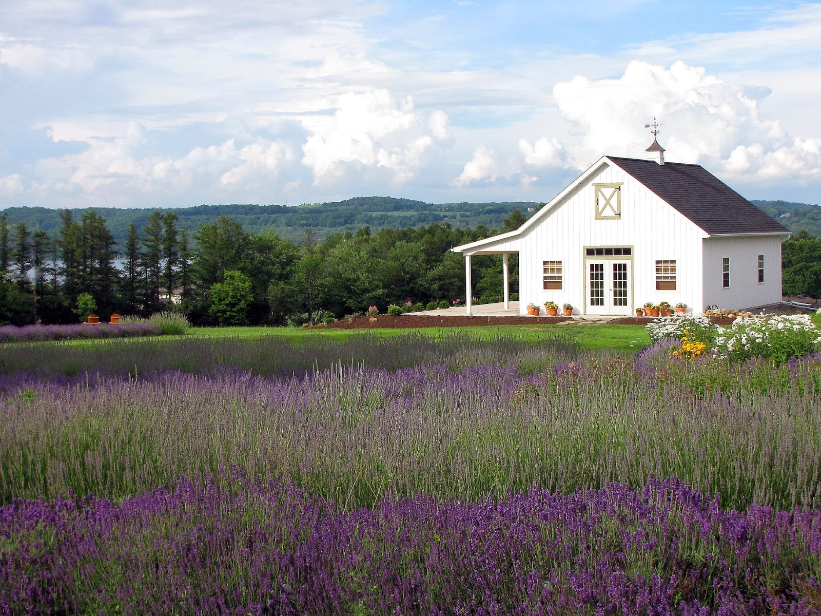 Lockwood Lavender Farm in Skaneateles  localyahoocom