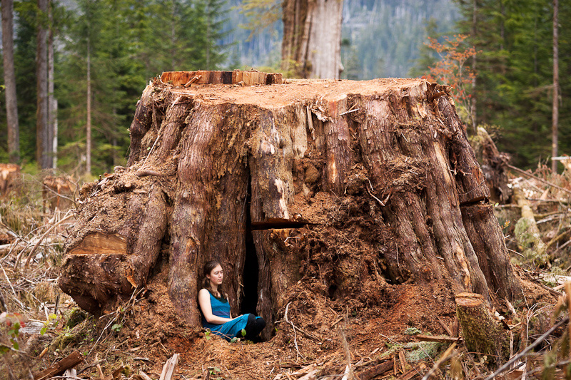 Vancouver Island Tree Cut Down
