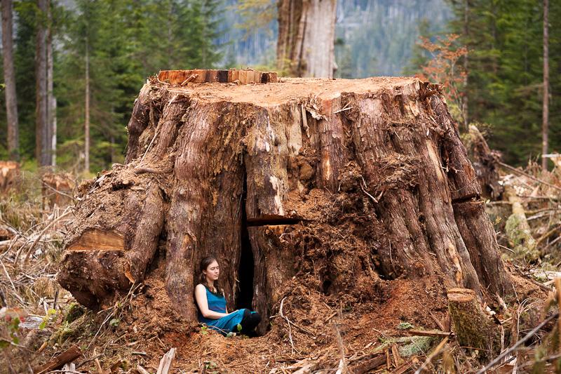 Giant Cedar Forest Vancouver Island