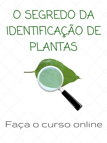 Curso de identificação de plantas