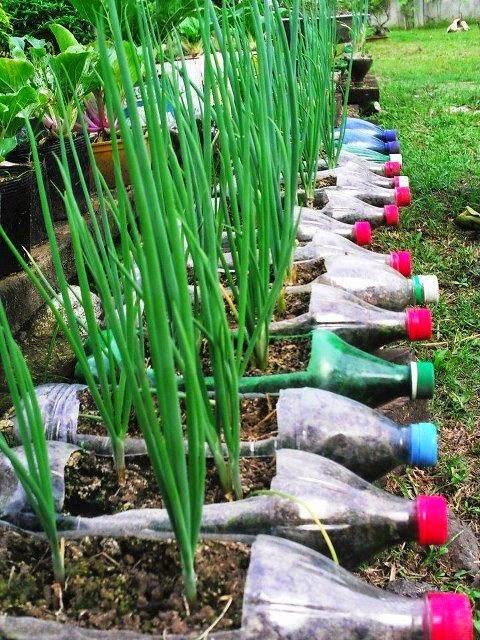 jardim vertical tecido:Temperos em vasos, floreiras e garrafas pets – Jeito de Casa – Blog de