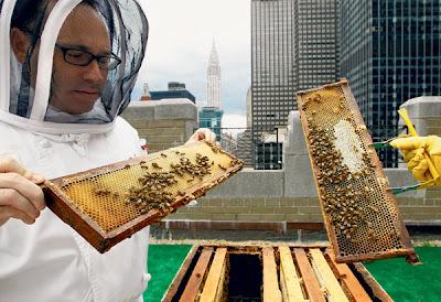 CHEF Waldorf Astoria, Josh Bierman memeriksa lebah madu yang diternak di atas bumbung hotel berkenaan kelmarin.