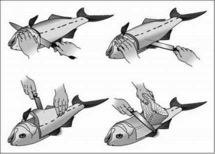 Čišćenje riba Riba-2