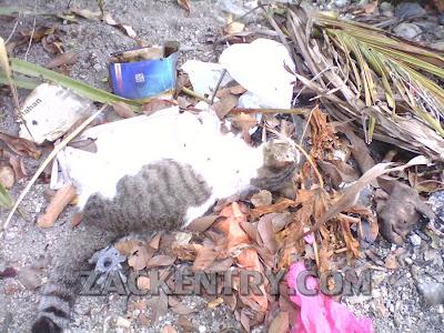 Kucing Mati