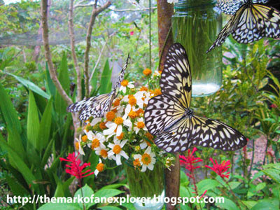 butterfly sanctuary bohol