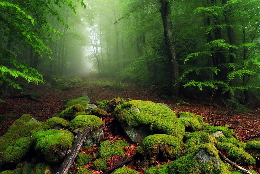 en g%C3%BCzel masa%C3%BCst%C3%BC resimler+%2819%29 2012 Yılının En Güzel Masaüstü Resimleri   Jenerik Fotoğraflar