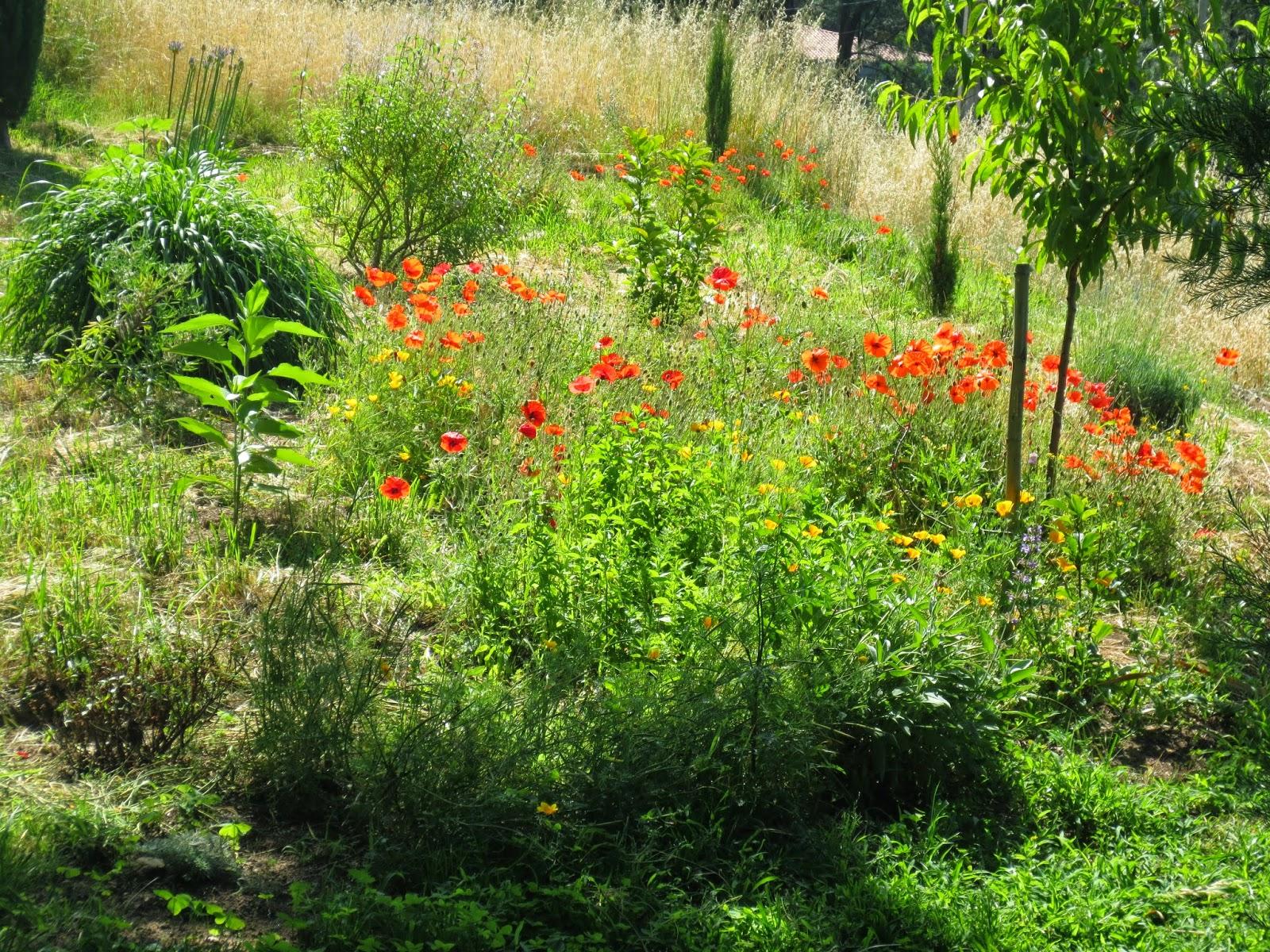 Color salud arteterapia el huerto de plantas aromaticas - Huerto de plantas aromaticas ...