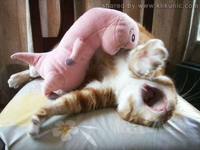 http://3.bp.blogspot.com/-Ac1azHIFknE/TXzEnejTQFI/AAAAAAAAREI/l9hxY4eSy6Y/s1600/these_funny_animals_635_640_19.jpg