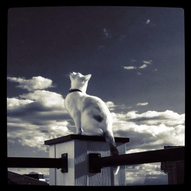 Gatos do Instagram