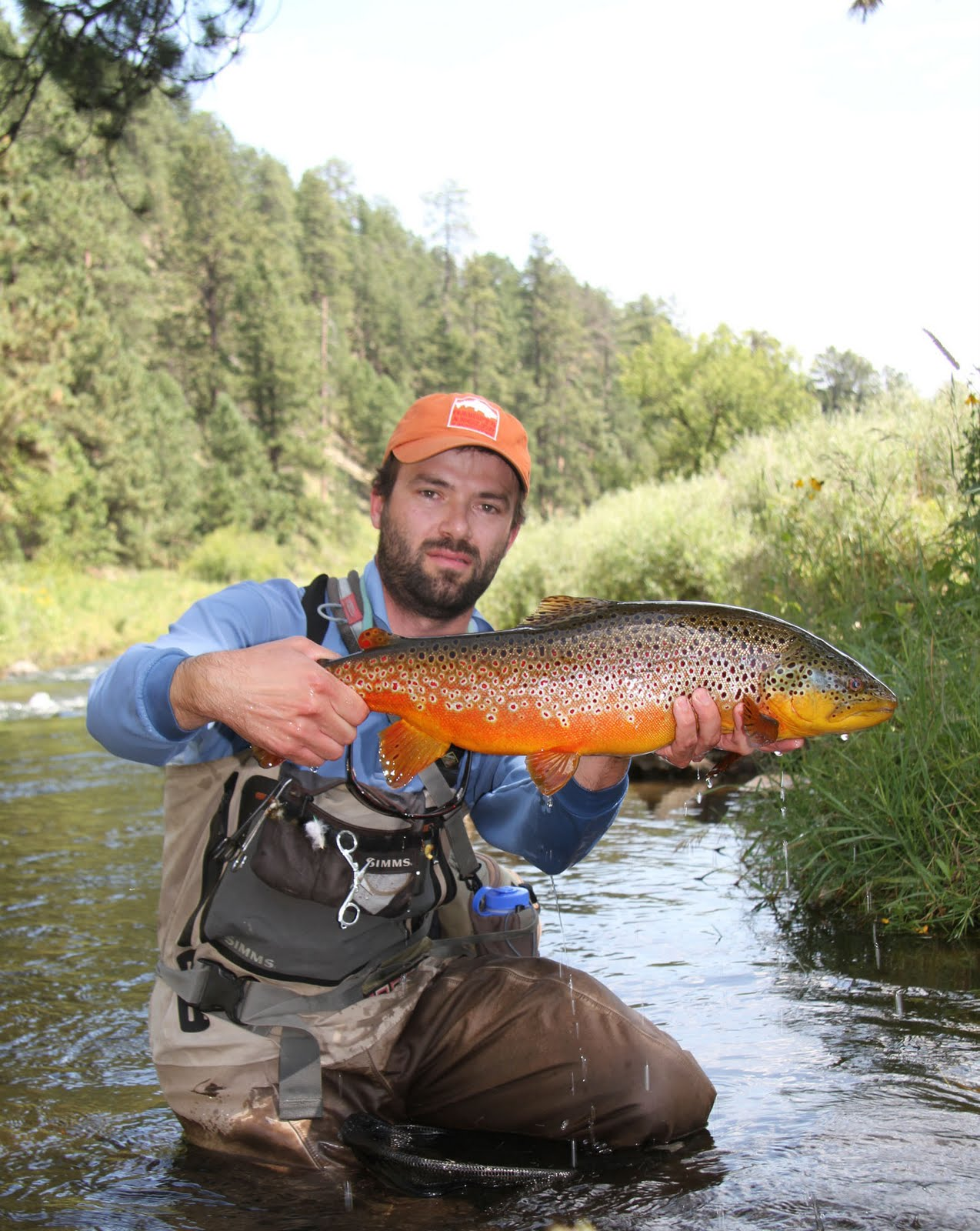 Black hills fly fishing dang purty brown trout for Brown trout fly fishing
