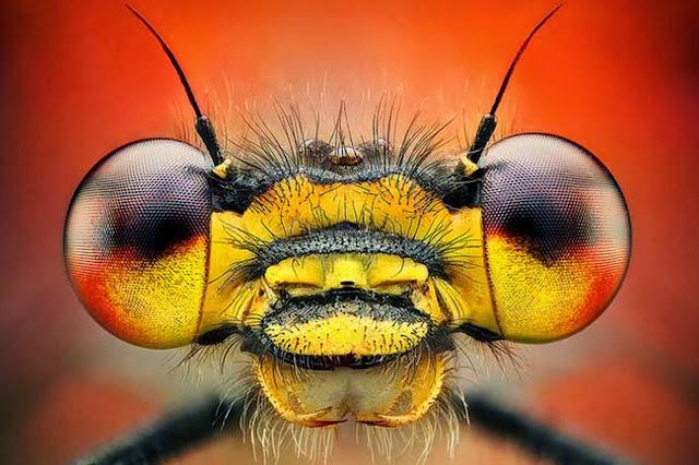 fotografias-insectos
