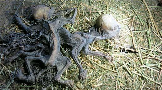Dos misteriosas criaturas con los craneos alargados encontrados en una finca en Chile