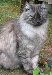 Kissani Mikki:Ikä 18,5-vuotta R.I.P.