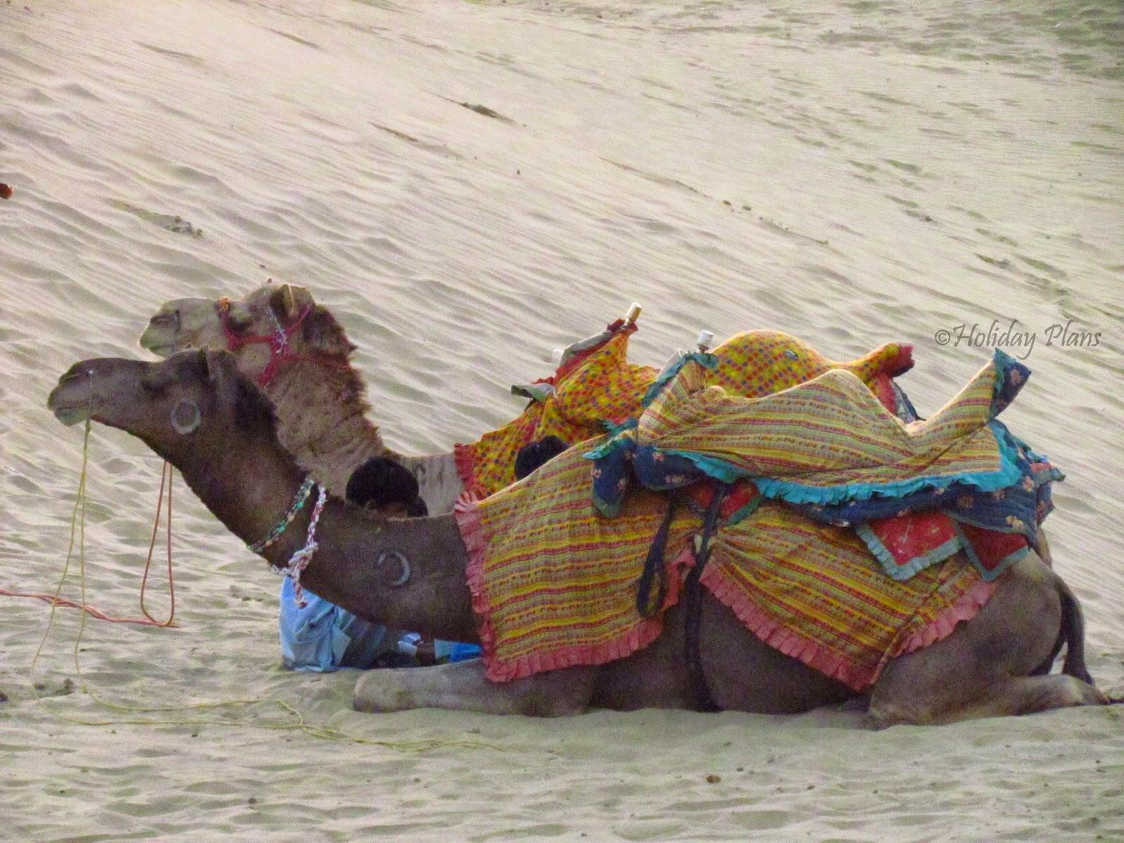 Thar Desert-Camel Ride