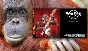 http://www.nationalreview.com/article/417259/hard-rock-removes-ad-after-accusations-guitar-playing-orangutan-offensive-katherine