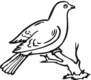 animal coloring pages, bird coloring pages
