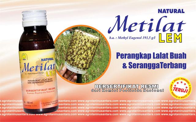 Natural METILAT Lem Perangkat Lalat Buah dan Serangga Terbang. METILAT Lem merupakan pengendali hama organik dari NASA (PT. Natural Nusantara)