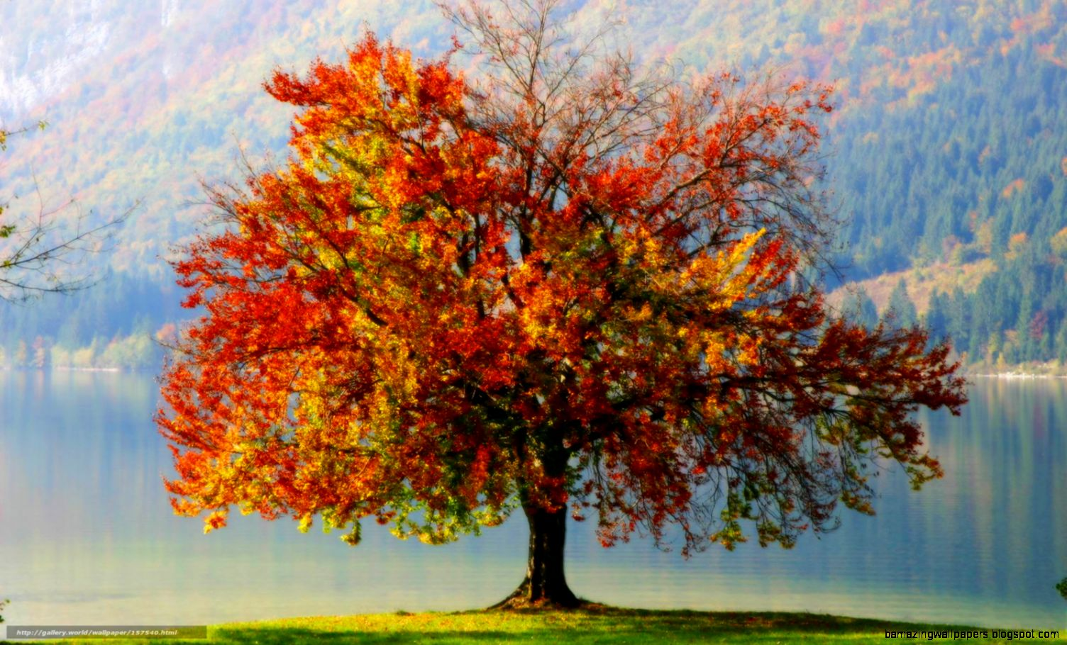 Autumn Trees Lake Wallpaper 54791  DFILES