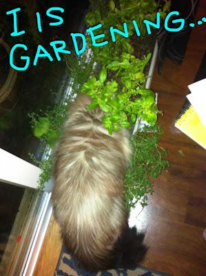 goma-gardening