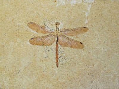10 Serangga Pada Zaman Prasejarah Yang Mungkin Anda Tidak Ketahui