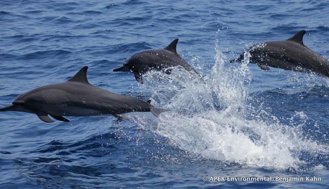 Ini Fakta Penting Taman Nasional Perairan Laut Sawu
