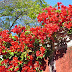 red flowers in this Portugal Freedom Day