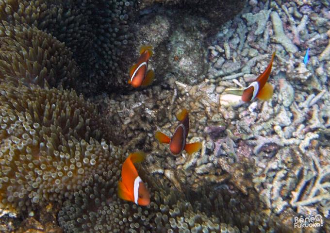 Nemo - Ôgamijima, Okinawa