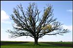 Magyarország legnagyobb fái (Dendromania)