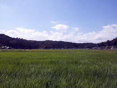 夏の田んぼ