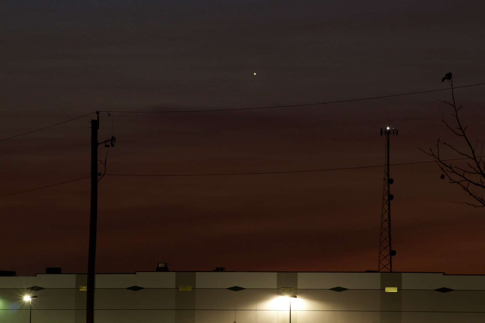 venus rising january 20
