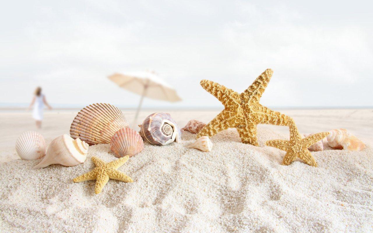 Deniz yıldızı resimleri deniz yıldızı resmi güzel deniz
