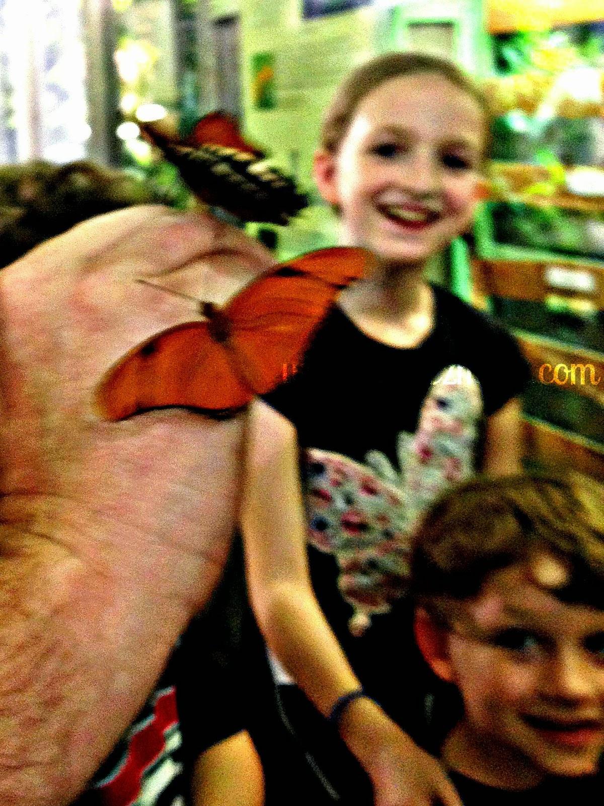 Two butterflies.