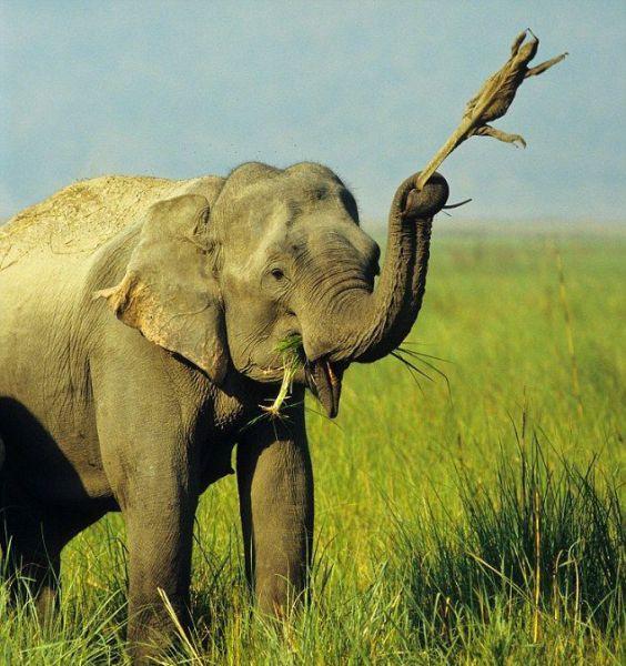 Elefante estranho