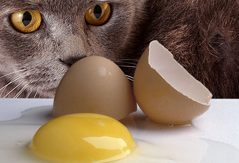 High Protein Food For Sick Cats
